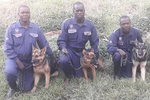 enterprise dog handler unit harare zimbabwe zimshoppingmalls