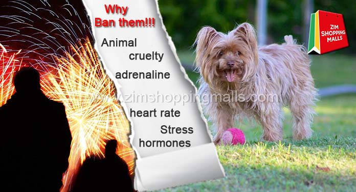 Fireworks: Are They Dangerous For Pets?