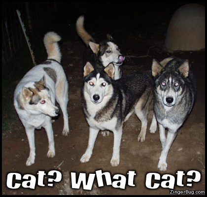 What Cat Funny Dog Photo Glitter Graphic Greeting