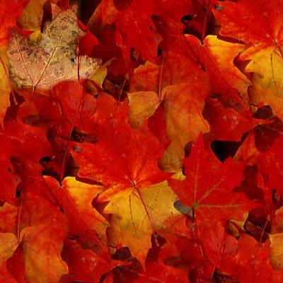 Autumn Tree Leaf Fall Animated Wallpaper Autumn Maple Leaves Seamless Texture Background Image