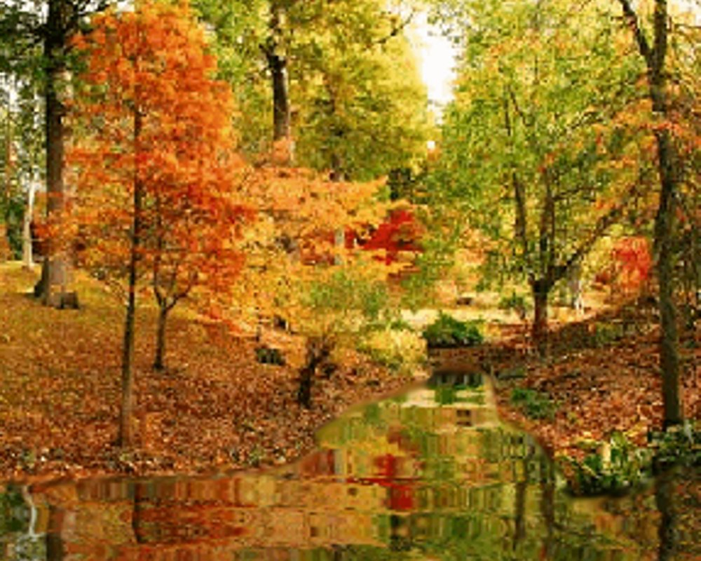 Wallpaper Images Of Fall Trees Lined Lake Fall Creek Background Image Wallpaper Or Texture Free For