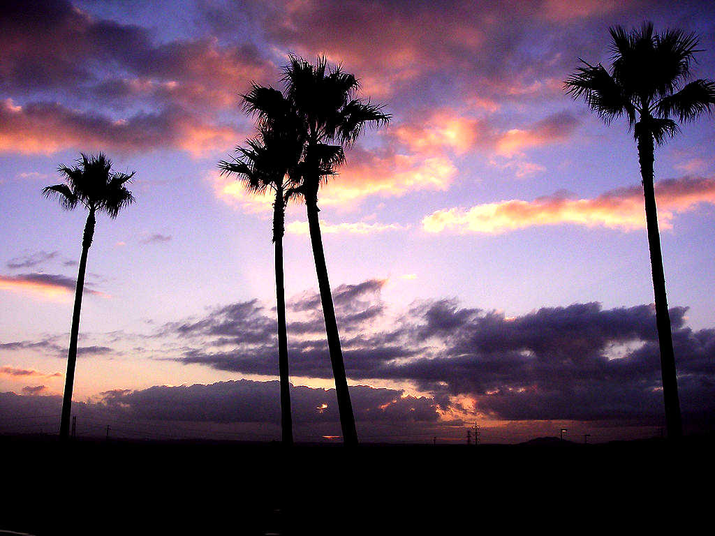 Fall Kittens Wallpaper Palm Trees At Sunset Background Image Wallpaper Or