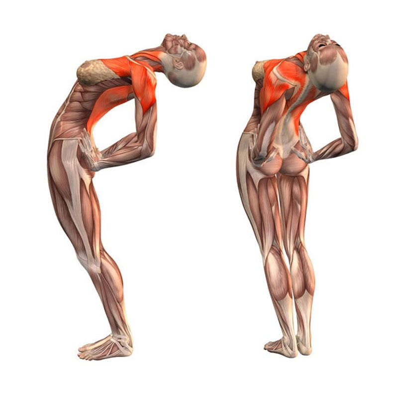 Auksinis_kompleksas__ziniusvetaine_lt Šie pratimai pagerina kraujo pritekėjimą į smegenis, ištiesina stuburą, praplečia kraujagysles