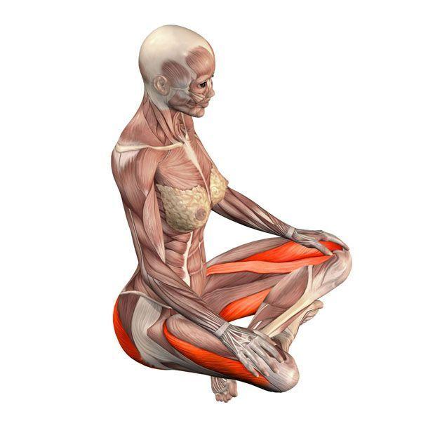 Gimnastika-moteru-vidaus-organams-sustiprinti Pratimai gerinantys mažojo dubens organų kraujotaką