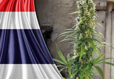 Tailandia aprueba legalización para uso medicinal y celebra con Festival