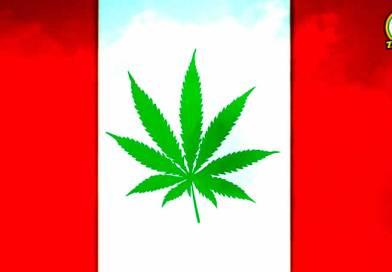 Marihuana en Perú: La promesa y la incertidumbre de una ley incompleta