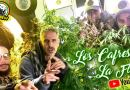 LOS CAFRES: nuevo video sobre LA MARIHUANA MEDICINAL