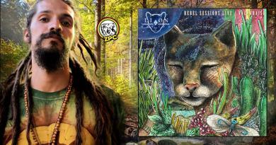 Rebel Sessions Live - lion nativo