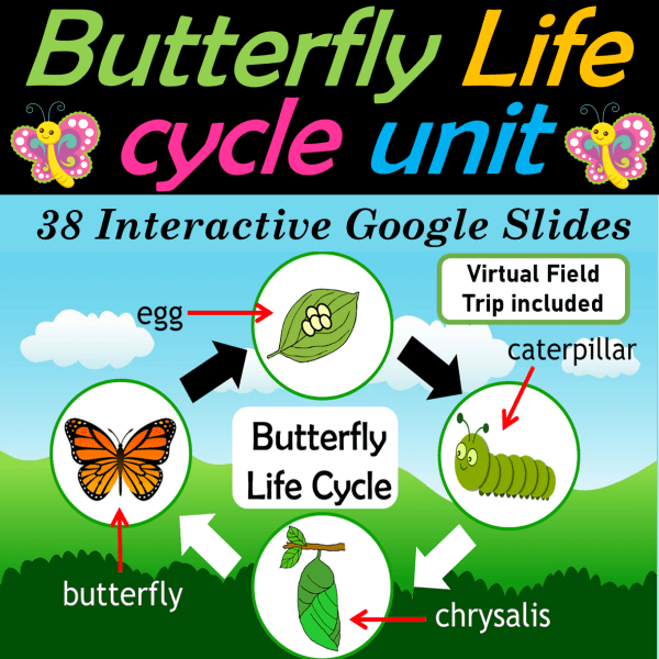 Butterfly Life Cycle Google Slides