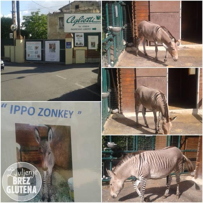 ippo zonkey firence 1