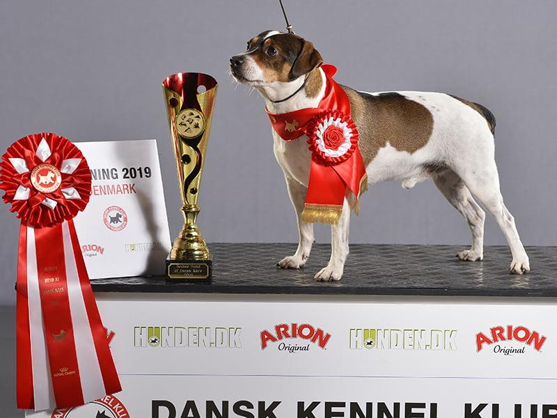 Søndag i Herning. Dansk vinder 2019