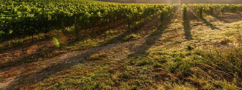 Ako vybrať kvalitné víno?