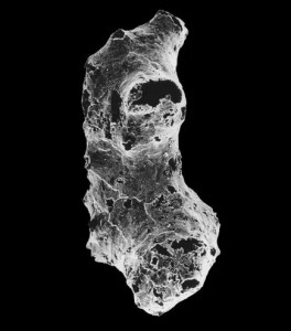 Electron microscope scanning view of Otavia antiqua. (c) Image courtesy Anthony Prave, University of St. Andrews