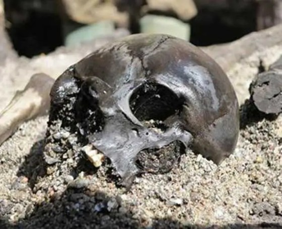 A fractured skull lies among the remains of hundreds of warriors in a Danish bog. Credit: Ejvind Hertz, Skanderborg Museum;