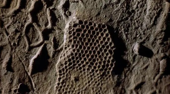 Fossilized burrows thought to be left by Paleodictyon nodosum [souce: scitechdaily.com]