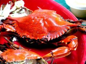 boiled crab feel pain