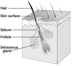 gray-hair-follicle