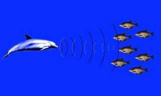dolphin_radar