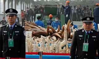 china-ivory