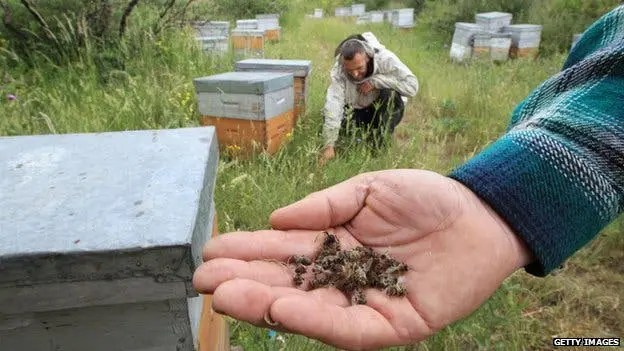 Neonicotinoid chemicals and bees