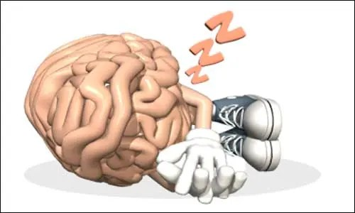 sing designer genes, researchers at UB and Harvard were able to 'turn on' specific neurons in the brainstem that result in deep sleep.  Image: Dreamstime