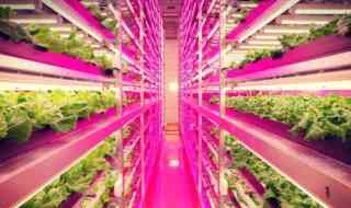 indoor-farm-japan-interior-644x483