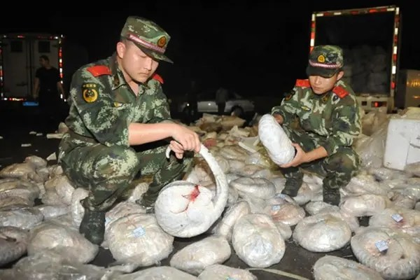Authorities confiscate nearly 1,000 dead pangolins. Photo from news.163.com.