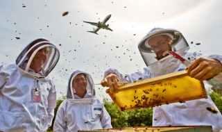 buzzing airport