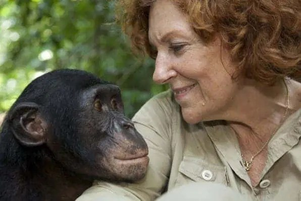"""Claudine Andre, the founder of Lola ya bonobo, and the """"friends of the bonobos of the Congo', an NGO which works in DRC with Timbo, one of her best bonobo friends. Photo courtesy of Christian Ziegler."""