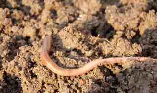 earthworm-686592_1920