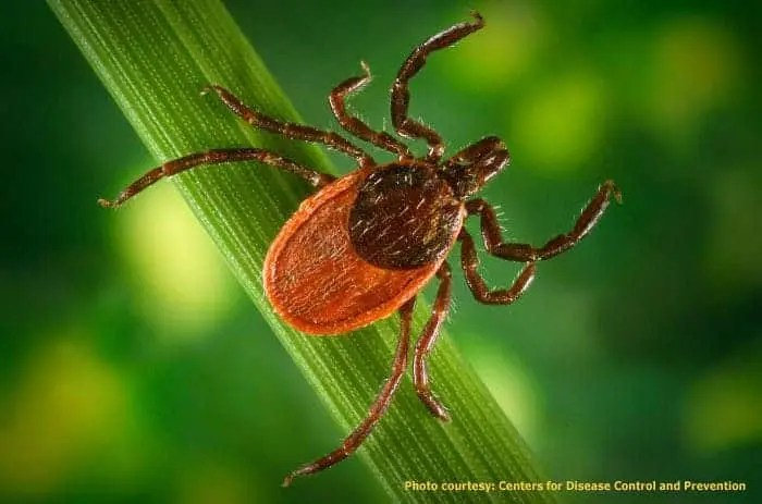 Preventing Lyme (And A New Disease) As Ticks Spread