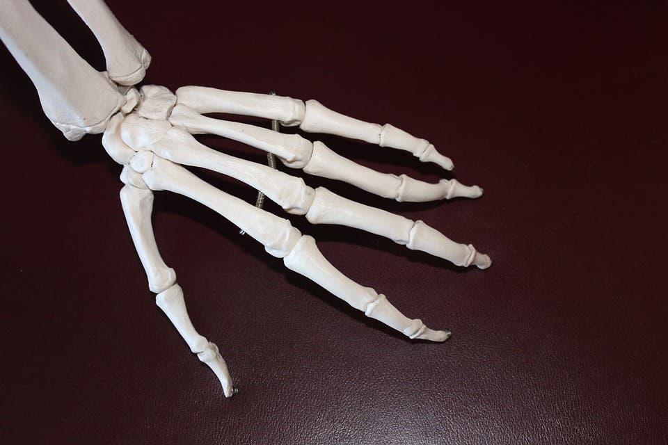 Skeletal hand.