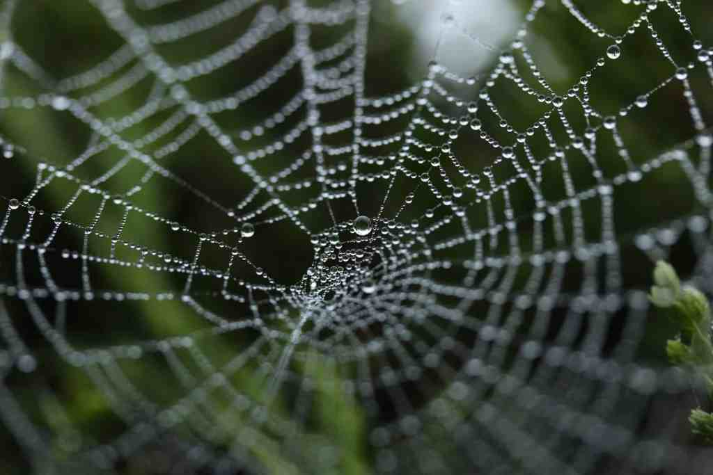 Spider web silk