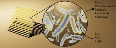 Artist's rendering of bioreactor (left) loaded with bacteria decorated with cadmium sulfide, light-absorbing nanocrystals (middle) to convert light, water and carbon dioxide into useful chemicals (right). Credit: Kelsey K. Sakimoto.