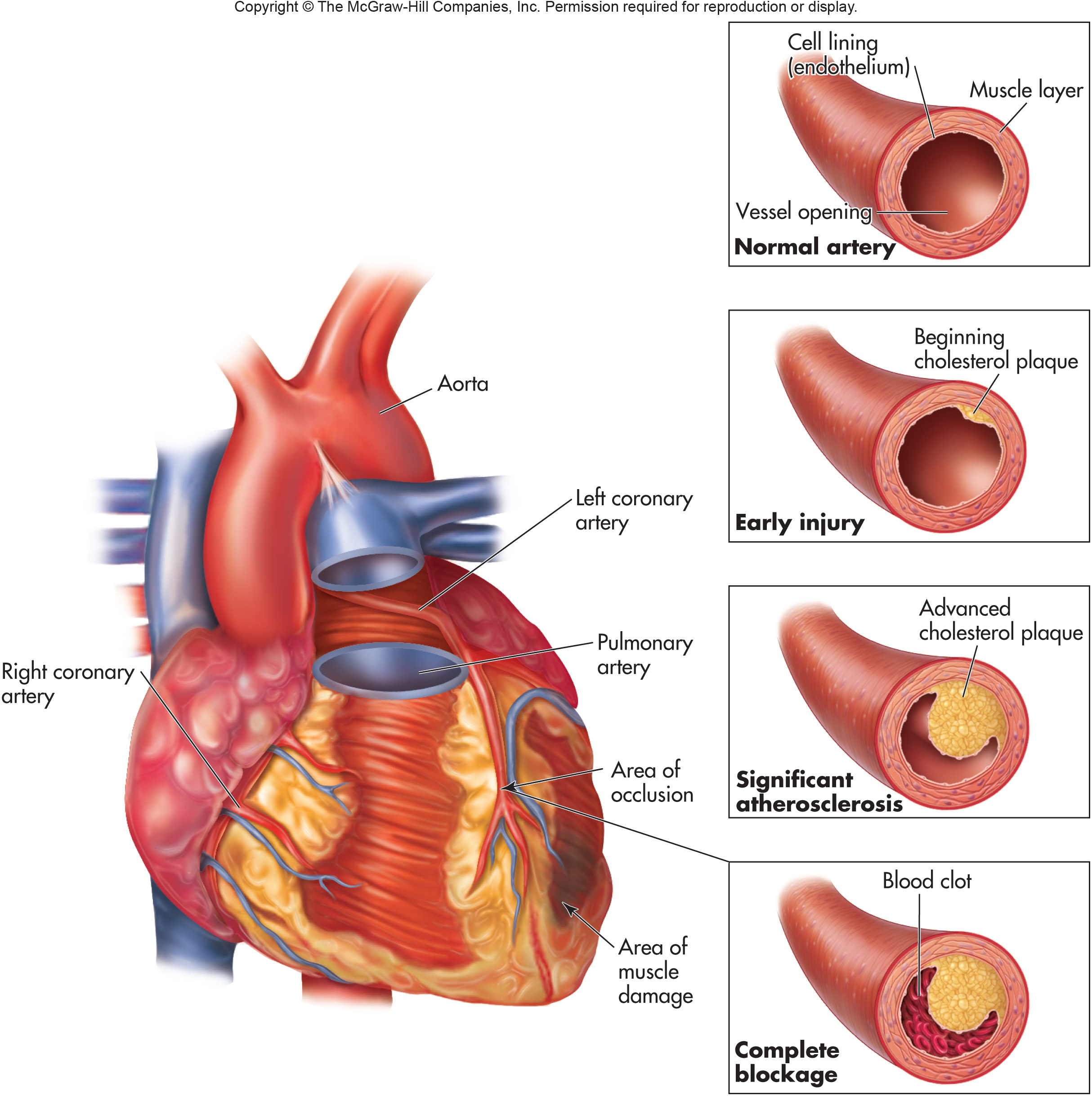 heart diagram outside 2016 toyota tundra jbl wiring circulatory system and cardiovascular disease