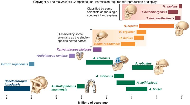 diagram of evolution timeline s10 wiper motor wiring human fig 27 9
