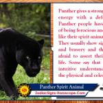 Panther Spirit Animal Totem Meaning Symbolism And Dreams Zsh