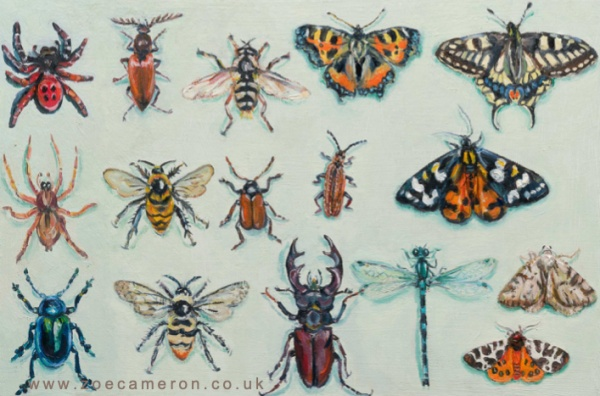 painting- Scientists warn that our insects could e extinct in a century-3 rows of 16 insects painted to represent a victorian display case of dead insects.Includes beetles, butterfly-moth-spider-stag beetle