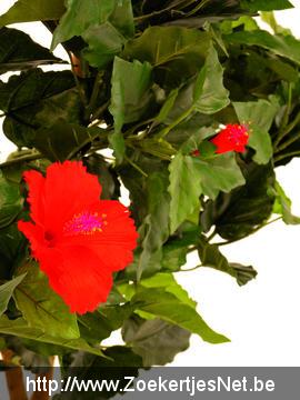 Kunstplant Hibiscus haag 90 x 110cm Aangeboden Nieuw
