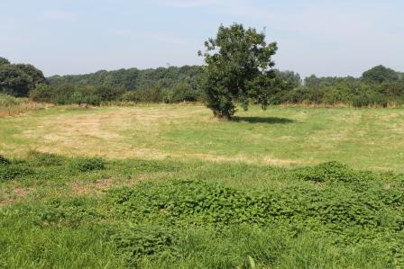 Zoete Geest Weide wordt Permacultuur Voedselweide