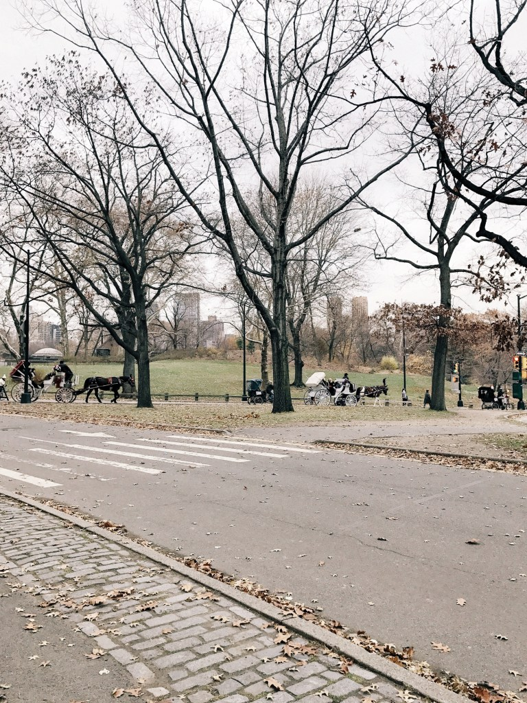 Central Park NYC early winter