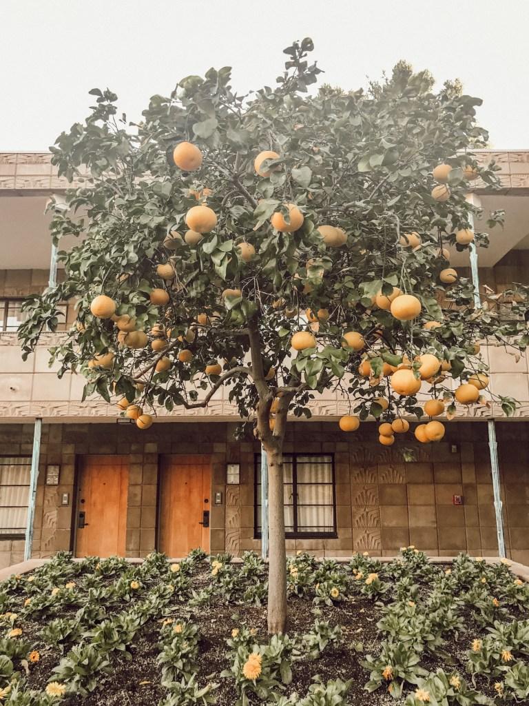 Lemon Tree, Arizona Biltmore | Pittsburgh Lifestyle Blog, Zoë With Love
