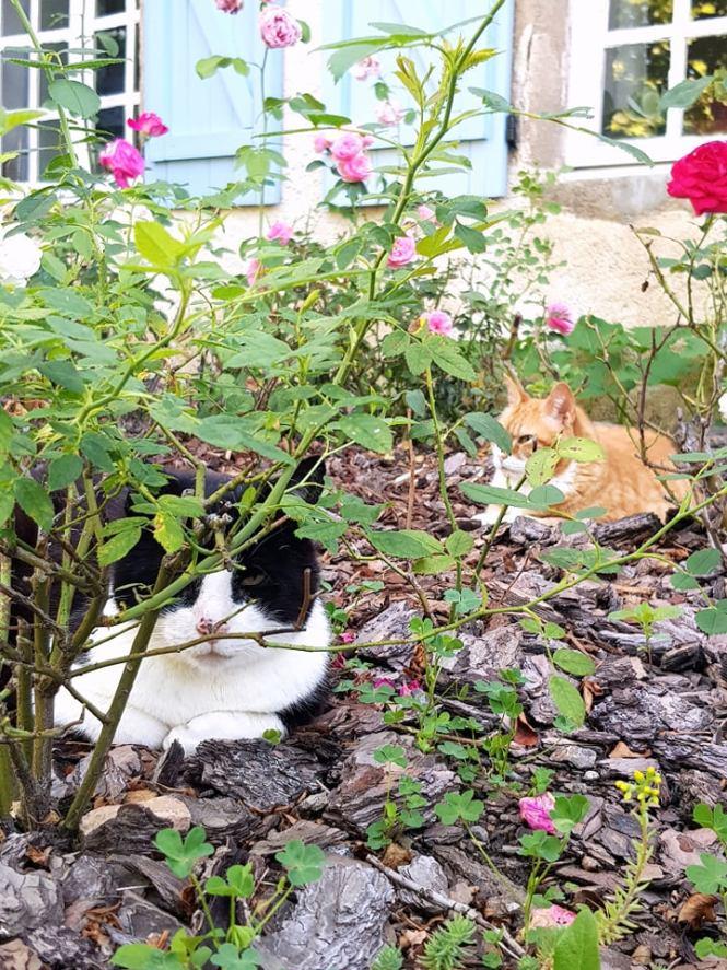 de twee huiskatten