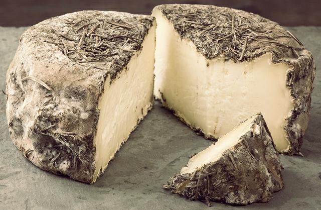 Zombie Cheese