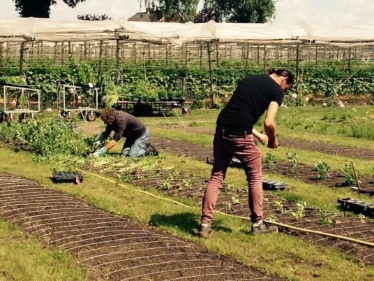 Planten en oogsten