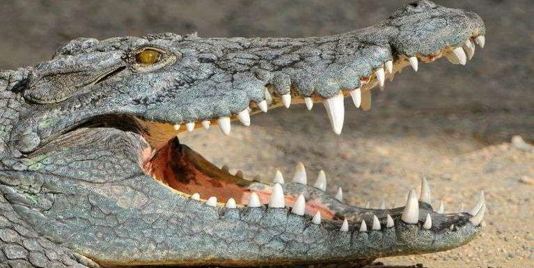 Malaysia pan UK gamsungah akipuak awle (Crocodile) 50 kiman