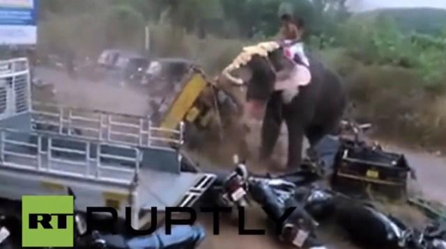 elefante-fuera-control-india
