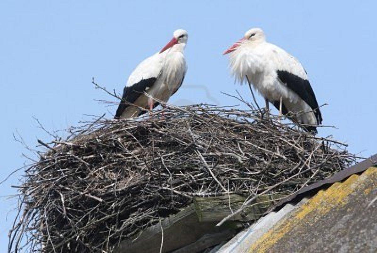 Да се поставят гнезда за щъркели, предлагат общински съветници