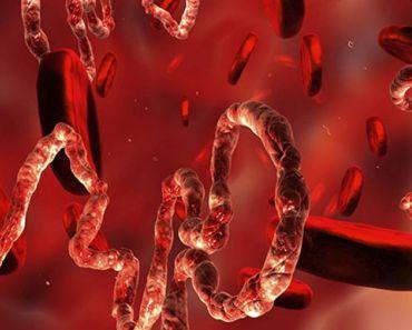 ¡Por fin! ¡La vacuna contra el Ébola está lista y funciona!