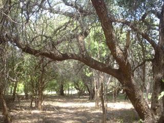 bosque1.jpg